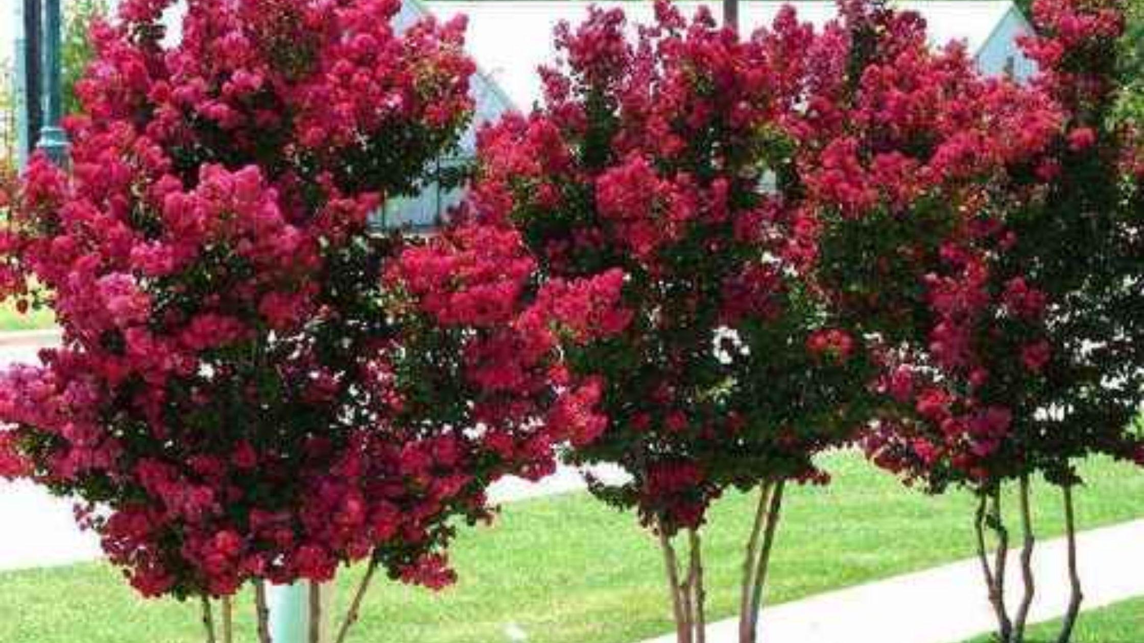 Flowering Plants at Tennessee Wholesale Nursery
